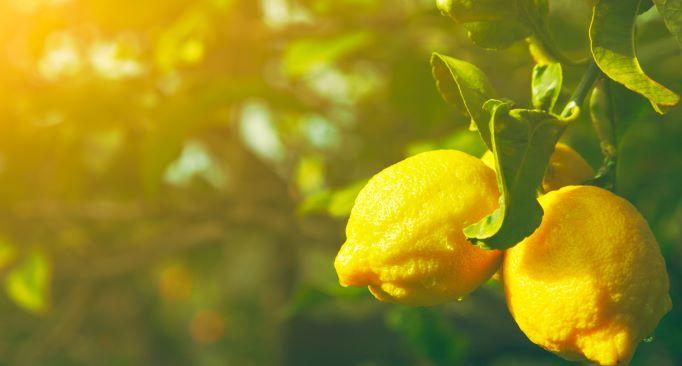 Zomergevoel Lemon